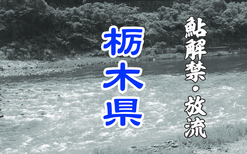栃木の鮎解禁