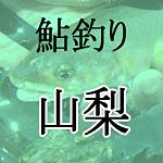 山梨鮎釣り解禁