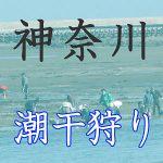神奈川の潮干狩りスポット