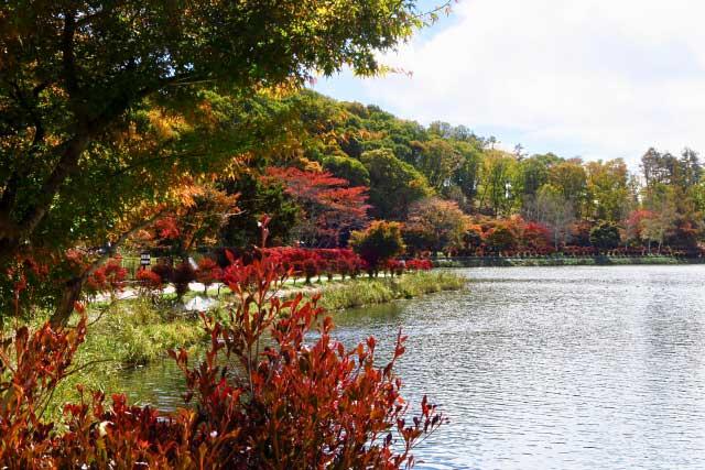 蓼科湖のイメージ画像